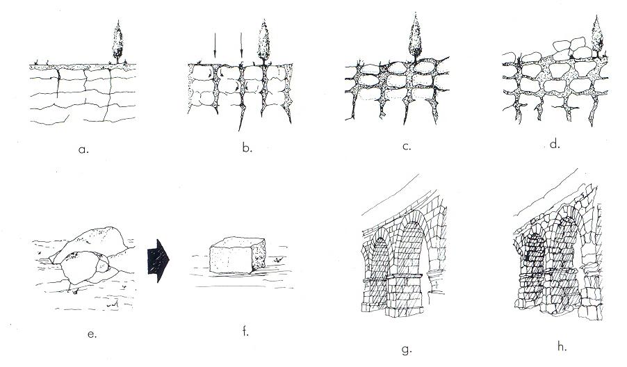 Segovia ecologia y paisaje (Diez y Martin, 1993)